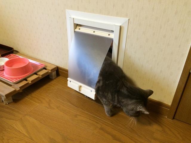 猫ちゃん専用のドアを新設です!