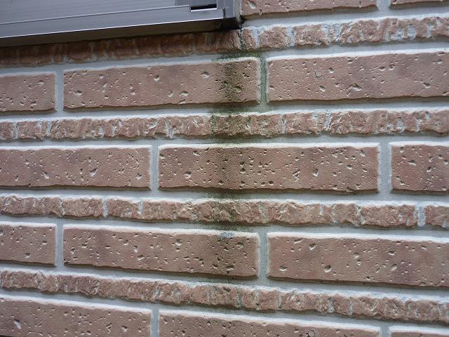 外壁劣化:カビ